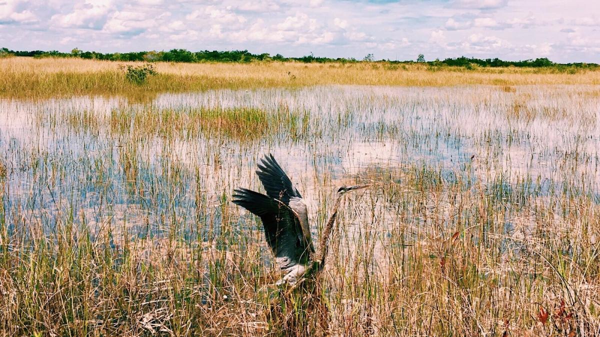 Les Everglades – Nationalpark