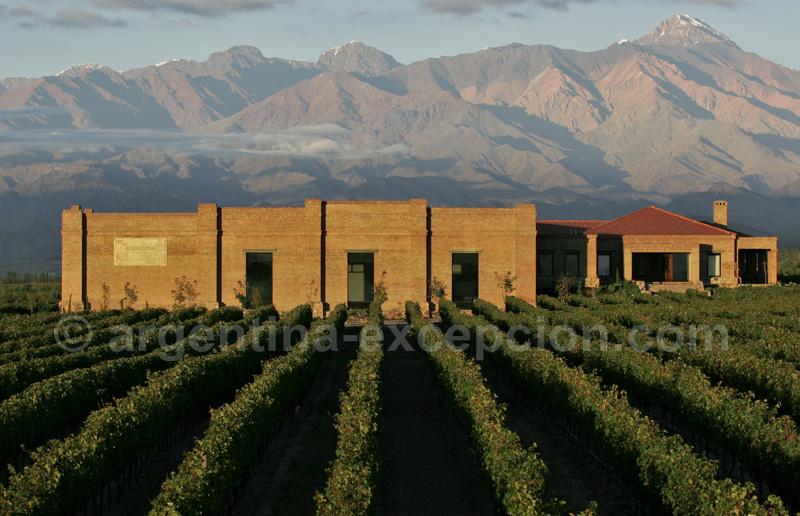 Bodega-y-viñedos-Andeluna, Mendoza